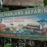 Walt Disney World: New Details About Animal Kingdom's Personalized Kilimanjaro Treks