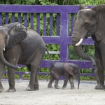 Animal Kingdom's Latest Baby Elephant Gets Name