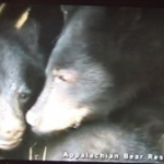Disney Awards $5,000 to Appalachian Bear Rescue