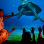 Characters from 'Finding Dory' to Join Turtle Talk with Crush at Disney Parks