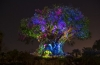 Disney's Animal Kingdom Comes to Life After Dark Beginning Memorial Day Weekend