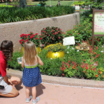 Citizen-Science Research at the Epcot Flower and Garden Festival