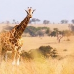 Adventures by Disney Announces Special South Africa Adventure