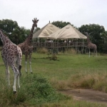 Review of Disney's Wild Africa Trek at the Animal Kingdom