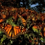 'Wings of Life' from Disneynature Debuts