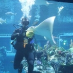 The Seas with Nemo & Friends Earns Reaccreditation from the Association of Zoos and Aquariums