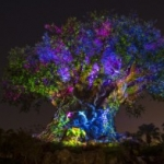 You Can Now Say 'I Do' In Front of the Tree of Life at Disney's Animal Kingdom