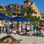 Vote to Name the Turtles at This Year's Tour de Turtles Event